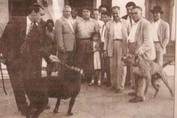 historia y origen raza dogo canario