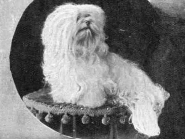 cuál es el origen del bichón maltés