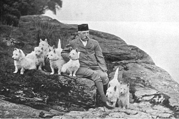 origen West Highland White terrier