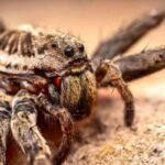 Caracteristicas-araña