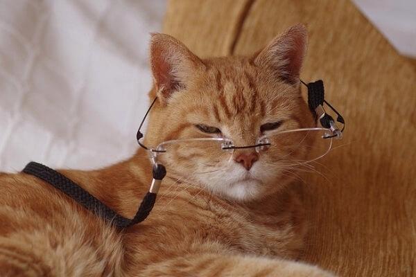 cómo cuidar un gato mayor