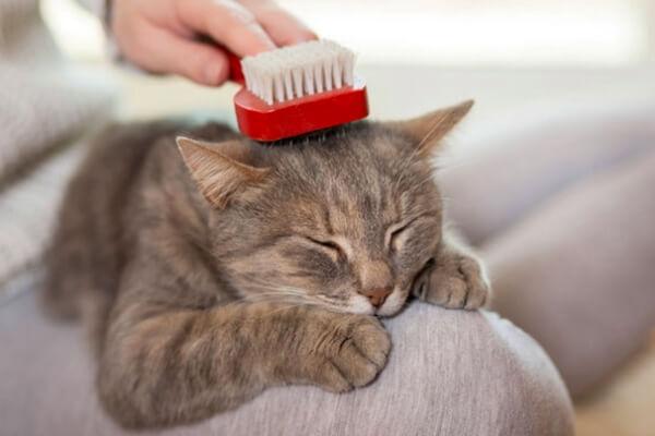 trabajos mantenimiento para gatos