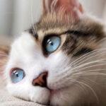 Principales enfermedades de los gatos