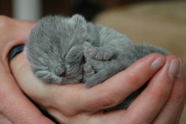Cuidados para gatos que acaban de nacer