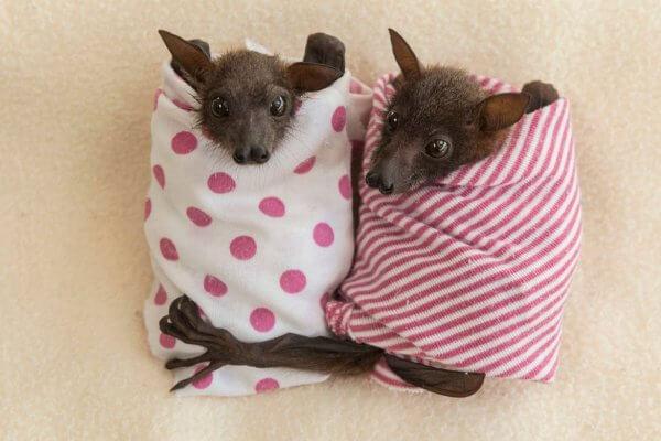 ¿Cuáles son las costumbres de los murciélagos?
