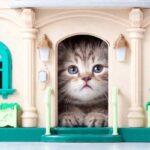 Peligros para un gato dentro de casa
