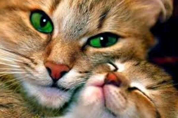 se puede acariciar a un gato recién nacido