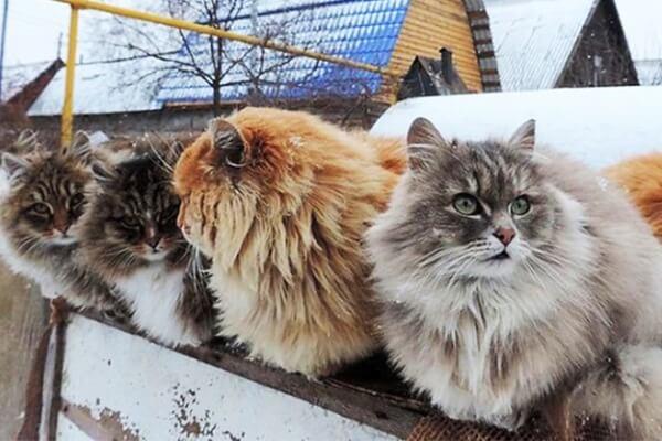 comprar gato en criadero