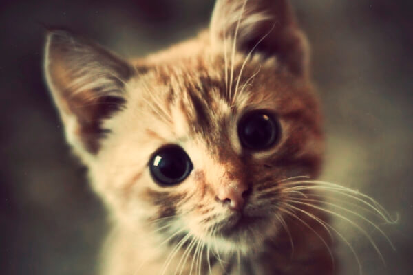 dónde comprar un gato