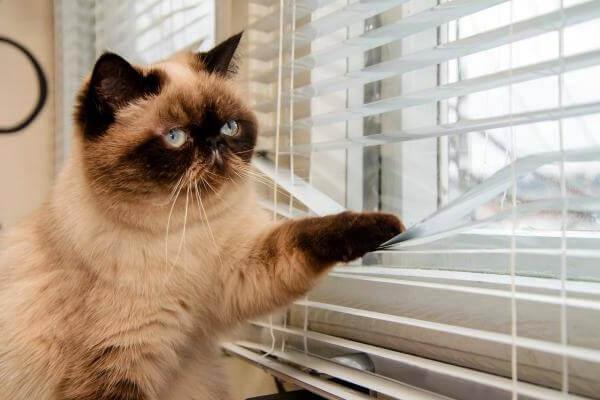 gato dentro fuera de casa