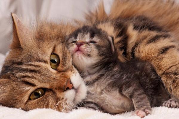 preparar el parto de una gata