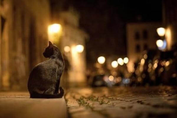 motivos para que un gato no salga de casa