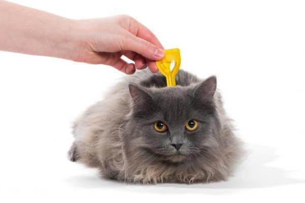 métodos desparasitación felinos