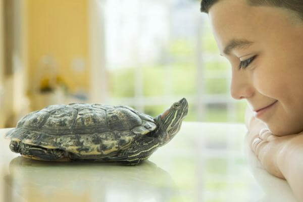 Consejos para tener una tortuga como mascota