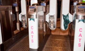 CurioSfera Animales noticia gatos metro londres