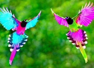 cuidados de las aves exóticas