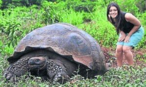 cuántas especies de tortuga existen