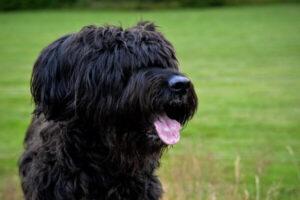 comportamiento perro serra de aires