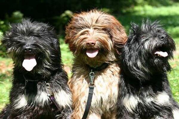 cómo es el perro serra de aires