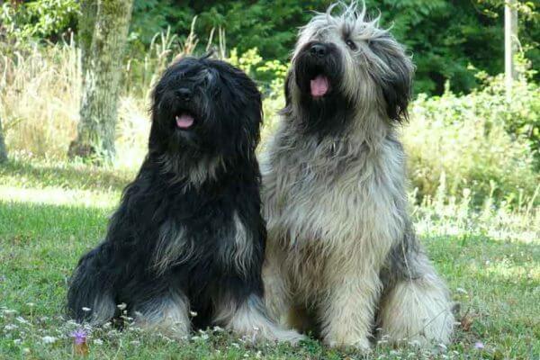 tamaño y peso raza de perro serra de aires