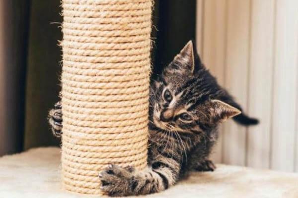rascadores para gatos usos