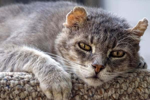 cuidados especiales para gatos ancianos