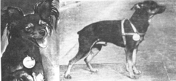 cuál es el origen del pequeño perro ruso