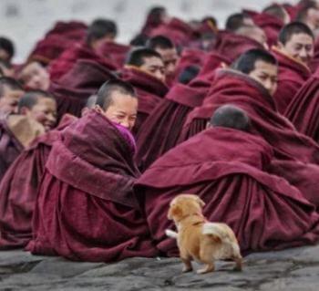 cuál es el origen spaniel tibetano