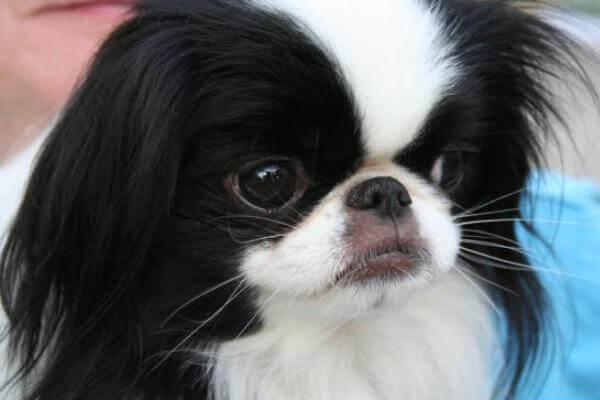 perro chien temperamento