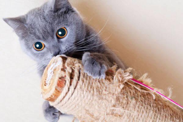 rascador para gatos carácterísticas