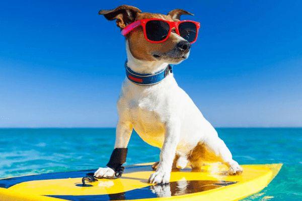 Qué hacer con mi perro en vacaciones