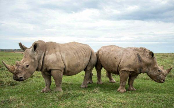 ¿Cuál es el hábitat de los rinocerontes?