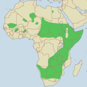 dónde viven los guepardos