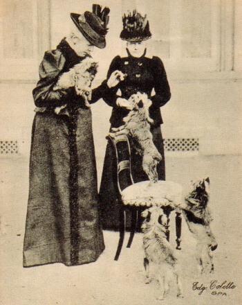 procedencia perro grifón belga