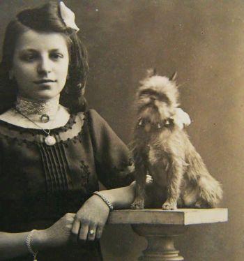 origen raza de perro grifón de Bruselas