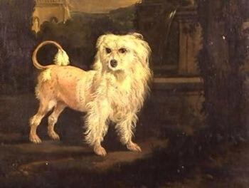 cuál es la historia del pequeño perro pastor