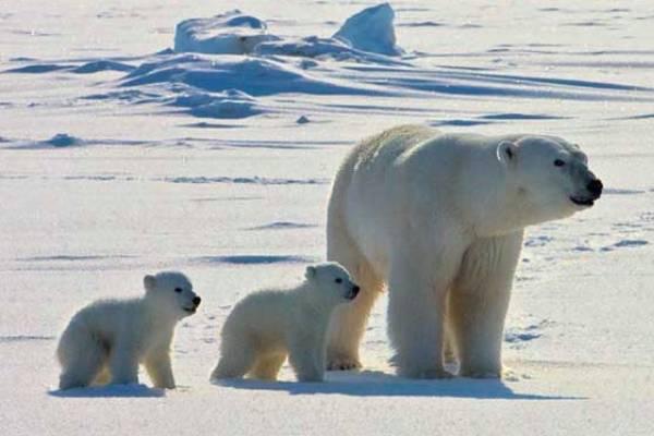 Cómo nace un oso