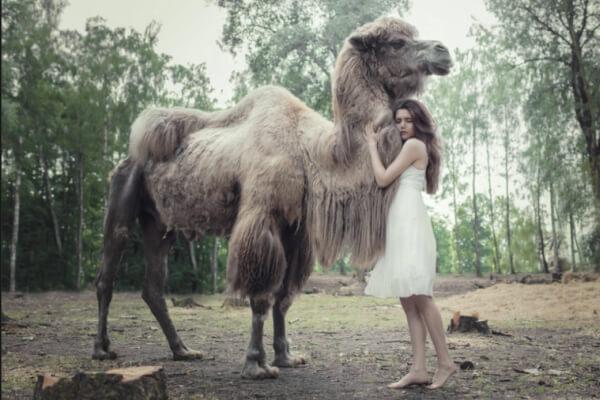 estructura social camello