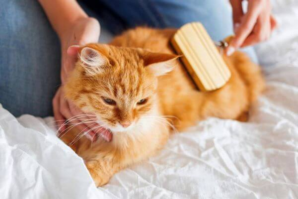 cómo cepillar gatos