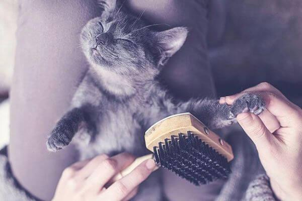 con qué cepillar a un gato