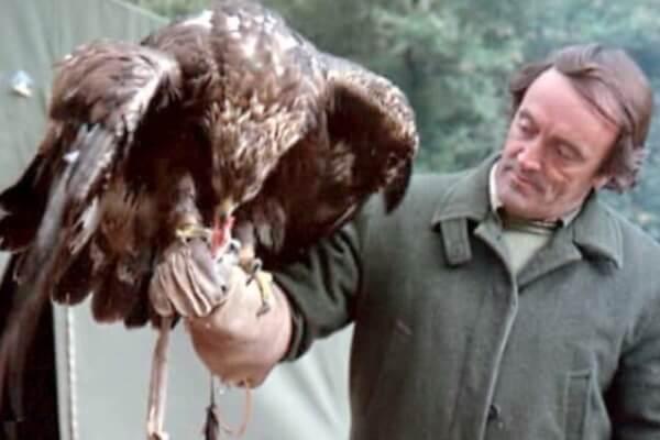 águila y hombre convivencia