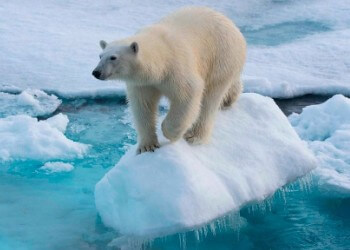 dónde viven los osos polares