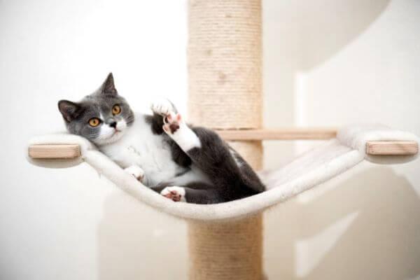 Qué hacer para el estrés de un gato